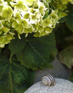 snail stuck2